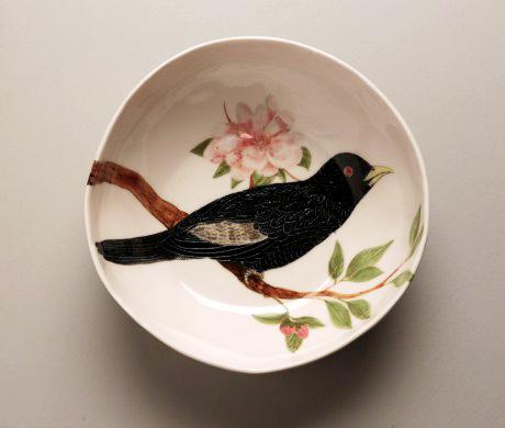 bird & koel