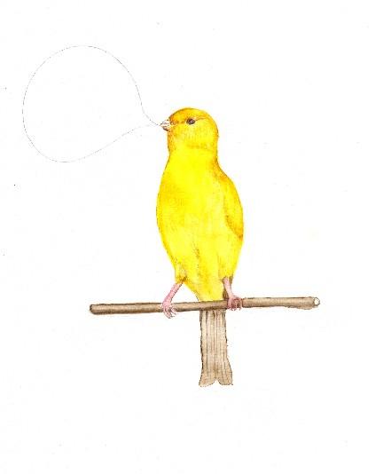 w:c canary036